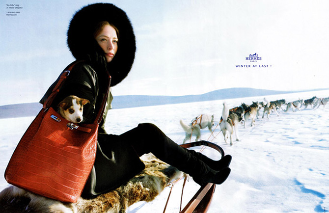 hermes winter at last dogsled 2009 2010 raquel zimmerman snow ice dog