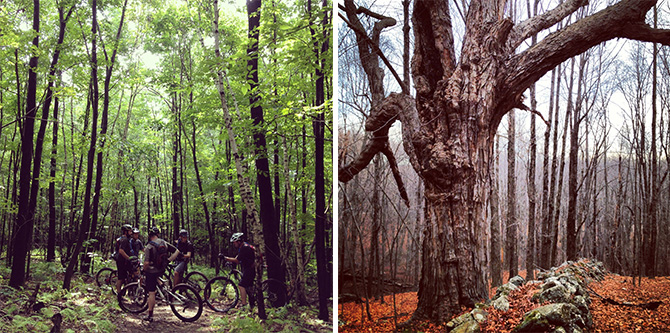 mountain bike forest woods green tree hinman nassahegan